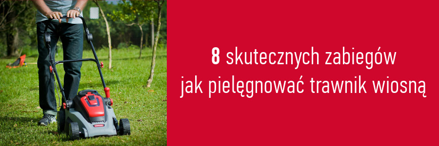 8 skutecznych zabiegów jak pielęgnować trawnik wiosną