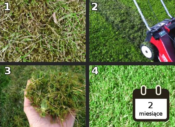 Oczyszczenie trawnika po zimie przy pomocy noża wertykulacyjnego OREGON